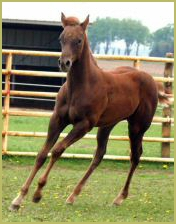 On the Red Carpet filly 585lead.jpg