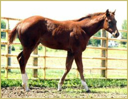 JF Skip N Style  X  Way To Glorious filly848.jpg