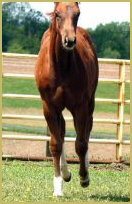 JF Skip N Style X Way To Glorious filly798.jpg