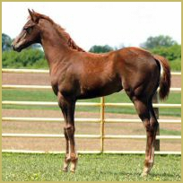The Top Secret  x  On The Red Carpet filly757.jpg